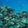 dahab-reef-and-fish-373_0_500